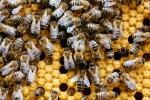 Unsere Bienen_2