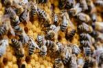 Unsere Bienen